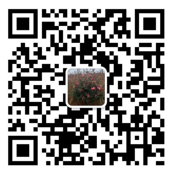 湖南龍飛電力建設有限公司