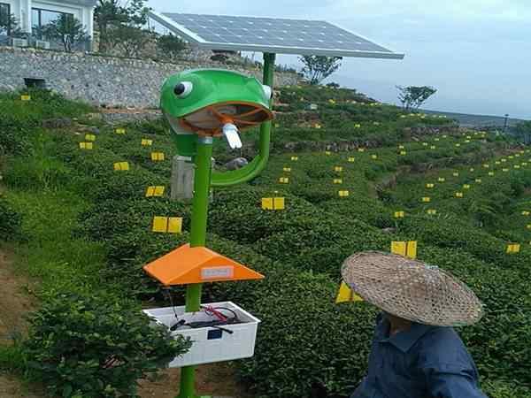 福建某茶叶基地
