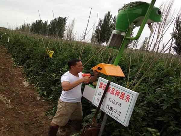 青海某蔬菜基地