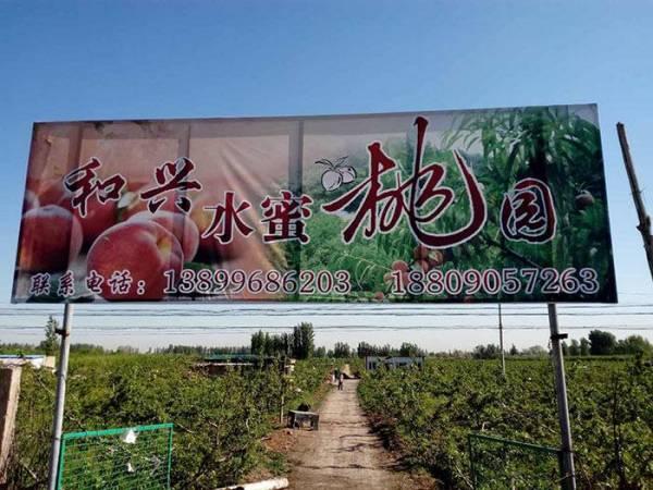 新疆水蜜桃