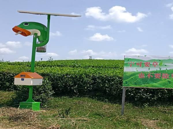 贵州湄潭有机茶基地