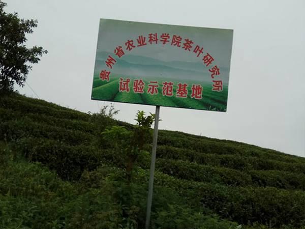 贵州苗王茶