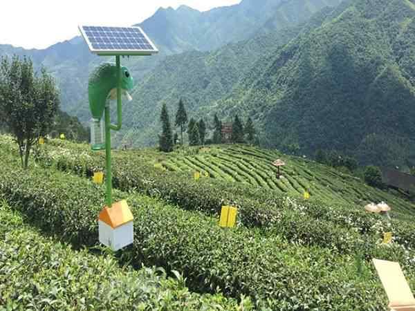 贵州凤冈有机茶基地