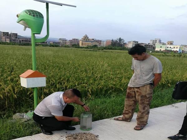 福建连江生态大米生产基地