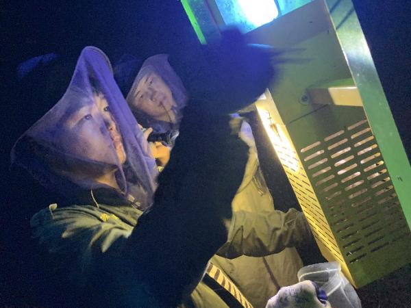 金龟子专用杀虫灯对湖北大悟花生害虫的防治效果