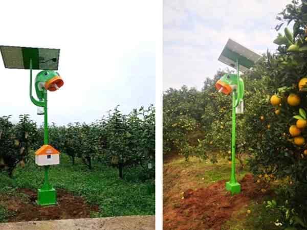 柑橘害虫专用杀虫灯防治效果分析