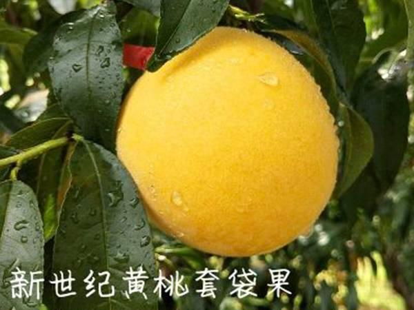 新世纪黄桃