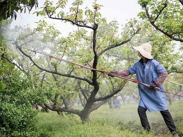 刚发芽的桃树苗怎样防治金龟子病虫害