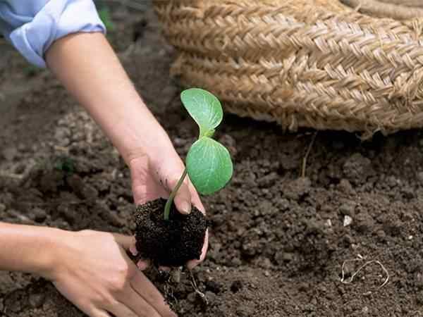 桃优良的桃树苗批发品种应该具有什么特性