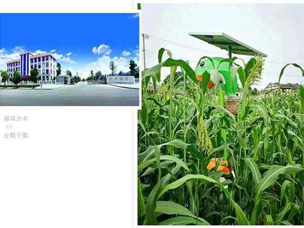8月本业精彩回顾及入秋后虫害绿色防治建议