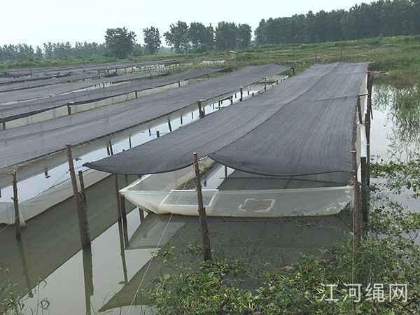 湖南常德水蛭网箱养殖基地