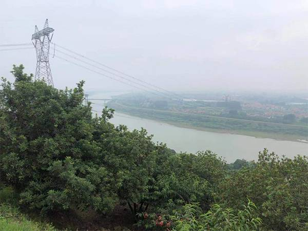杨梅原料基地