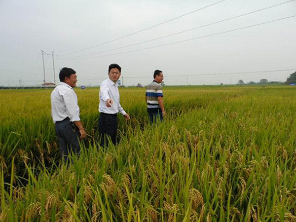 湖南省种子管理局领导莅临考察指导工作