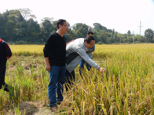 金秋10月公司迎来省内知名育种专家考察指导科研工作