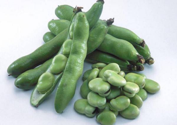 我和蚕豆的故事--绿心蚕豆